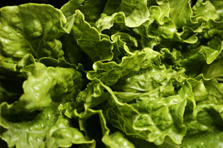 lettuce_romaine_leaves