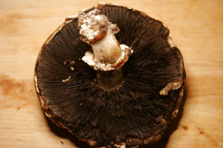 portabella_mushroom_old